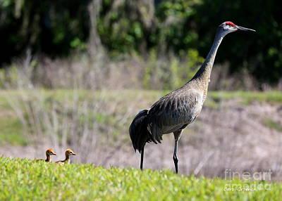 Baby Bird Photograph - Follow The Leader by Carol Groenen