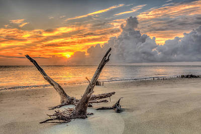 Folly Beach Driftwood Art Print