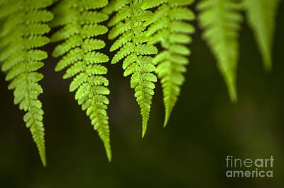 Photograph - Forest Setting With Close-ups Of Ferns by Jim Corwin