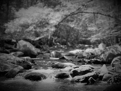 Photograph - Forest Stream by Gary Smith
