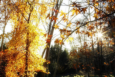 Leaves Changing Photograph - Forest Sunlight by Les Cunliffe