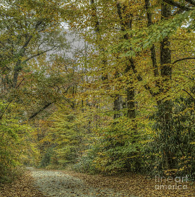 Photograph - Forest Trail by David Waldrop