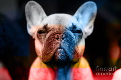 Puppies Mixed Media - French Bulldog  by Marvin Blaine