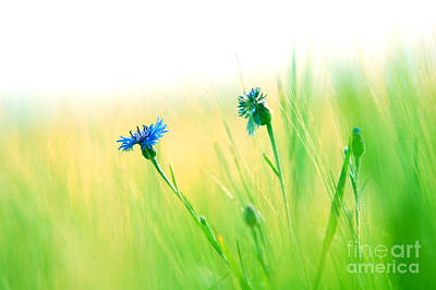 Growth Photograph - Fresh Meadow Background by Michal Bednarek