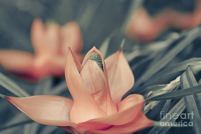 Freycinetia Multiflora - Climbing Pandanus Art Print by Sharon Mau