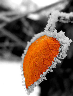 Fernley Photograph - Frosty by Chad Rice