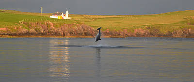 Photograph - Fungie The Dingle Dolphin by Barbara Walsh