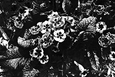 Photograph - Garden In Black And White by Sarah Loft