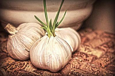 Garlic Art Print by Kelly Hazel