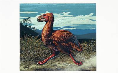 Paleozoology Photograph - Gaston's Bird by Deagostini/uig