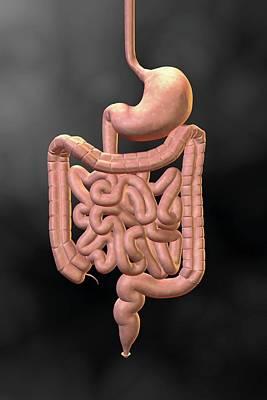 Anus Photograph - Gastrointestinal System by Harvinder Singh