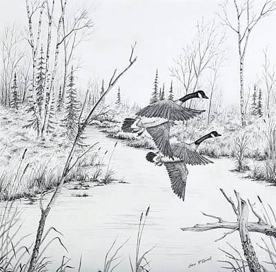 Autumn Landscape Drawing - Geese In Flight by Gary McDonnell