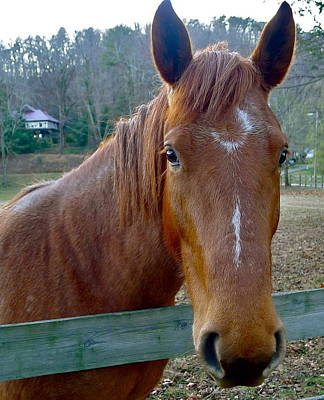 Photograph - Georgia Horse by Denise Mazzocco
