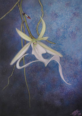 Painting - Ghost Orchid II by Robin Street-Morris