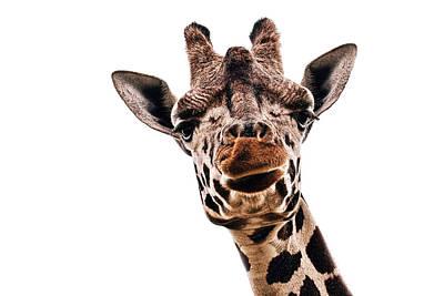 Staring Photograph - Giraffe by Marcia Colelli