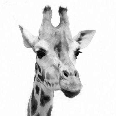 Giraffe On White Background  Art Print