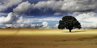 Photograph - Gloucestershire Fields by A Goncalves