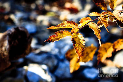 Golden Leaves Art Print by Lawrence Burry