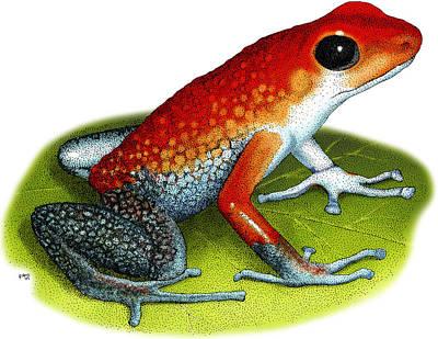 Photograph - Granular Poison Dart Frog by Roger Hall