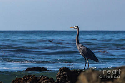 Photograph - Great Blue Heron by Terry Cotton