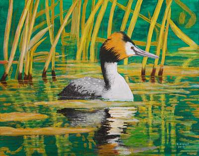 Crested Duck Painting - Great Crested Grebe by Brian West