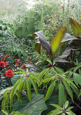 Canna Photograph - Great Dixter Gardens, Uk by Science Photo Library