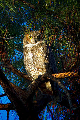 Wildlife Photograph - Great Horned Owl by Mark Andrew Thomas