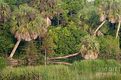 Green Cay Wetlands, Fl Art Print by Mark Newman