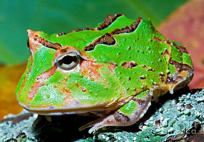 Green Fantasy Frogpacman Frog Art Print by Millard H. Sharp