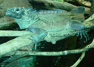 Photograph - Green Iguana 2 by Ellen Henneke