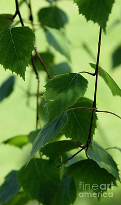 Photograph - Green Leaves  by Erica Hanel