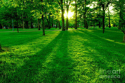 Natural Background Photograph - Green Park by Elena Elisseeva