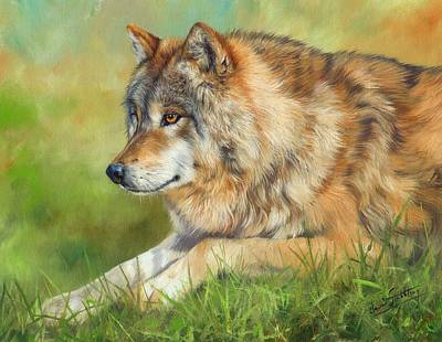 Animals Paintings - Grey Wolf by David Stribbling