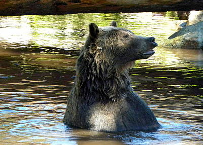 Fine Dining - Grizzly Bear by Brigitte Mueller
