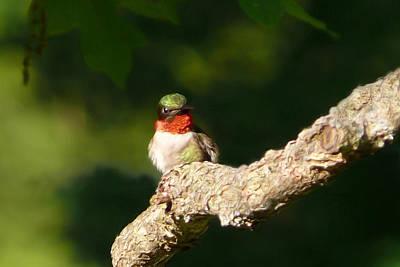 Painting - Guardian Hummingbird by Christina Rollo