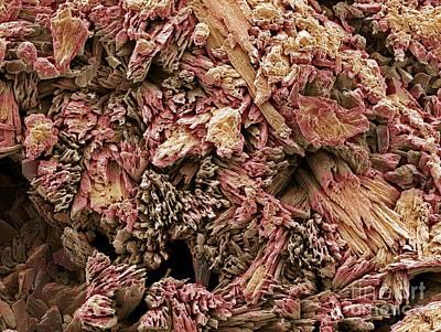 Gypsum Crystals, Sem Art Print