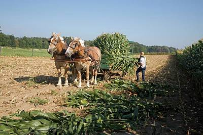 Amish Photograph - Harvest On An Amish Farm by Jim West