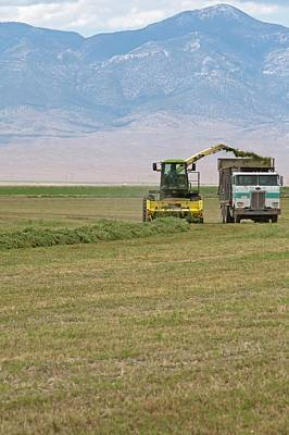 Medicago Photograph - Harvesting Alfalfa Crop by Jim West