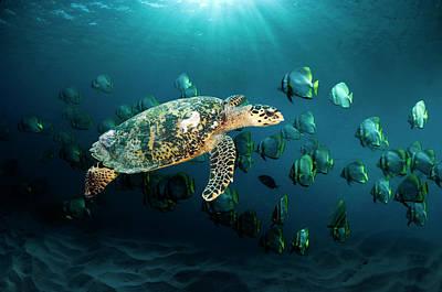 Photograph - Hawksbill Sea Turtle by Georgette Douwma