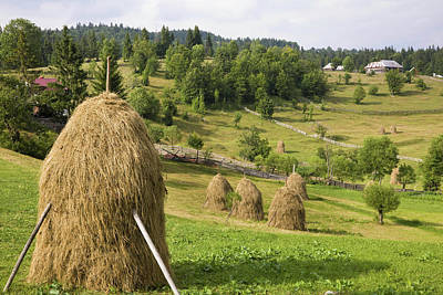 Hay Harvest And Haystack In The Apuseni Art Print