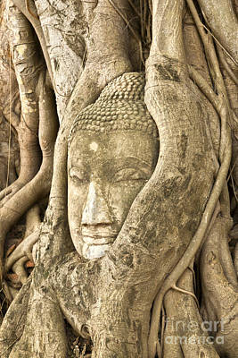 Tree Roots Photograph - Head Of Buddha Ayutthaya Thailand by Colin and Linda McKie