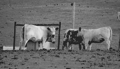 Cattle Chute Photograph - Hey Look At The Stupid Tourist by Barbara Snyder