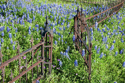 Hill Country, Texas, Bluebonnets Art Print