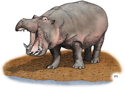Photograph - Hippopotamus by Roger Hall