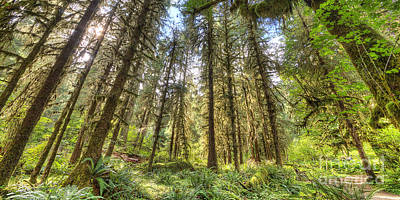 Hoh Rain Forest Art Print by Twenty Two North Photography