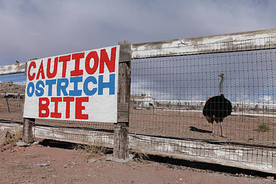 Ostrich Photograph - Holbrook, Arizona, United States by Julien Mcroberts