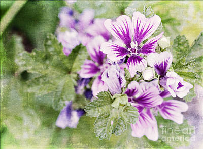 Photograph - Hollyhocks by Pam  Holdsworth