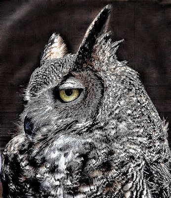 Photograph - Horned Owl by Janet Maloy