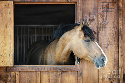 Animals Photos - Horse in stable 2 by Elena Elisseeva