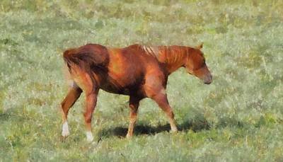 Wild Horse Mixed Media - Horse On The Farm by Dan Sproul